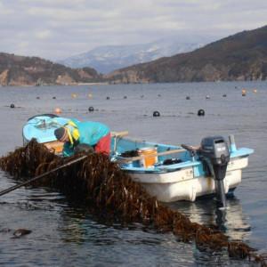 2012収穫_船2